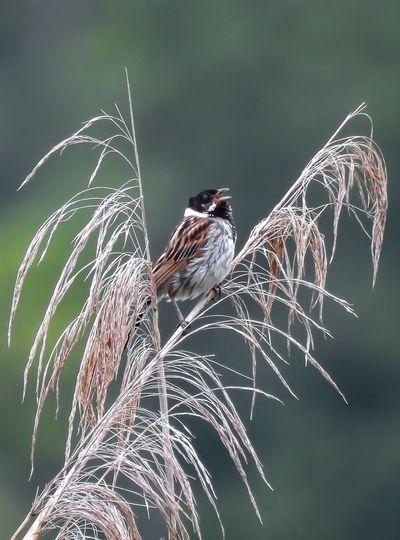 Singvogel Vogel Wildlife Photography Animal Themes Animal Wildlife Animals In The Wild Bird Close-up Nature One Animal Outdoors Wildlife