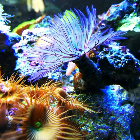Sea Life Underwater UnderSea Coral Water Fish Sea Aquarium Beauty In Nature Reef Marine Life Aquarium Photography Fishkeepers Fishkeeping Reeftank Fishtank Aquarium Life Coral Reef Tubeworm