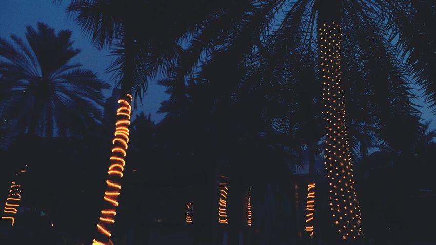 Palm Trees Night Lights Flashy Lights Jumeirahbeach
