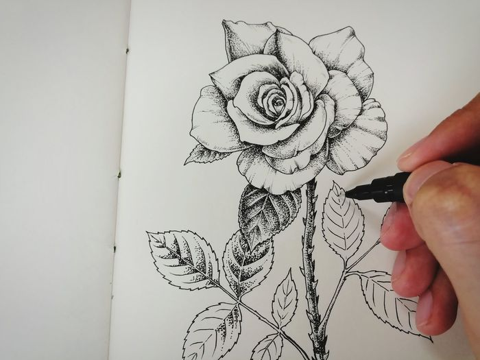 Close-up of person hand holding red flower