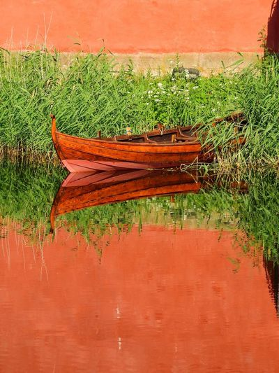 Close-up of orange plants in lake