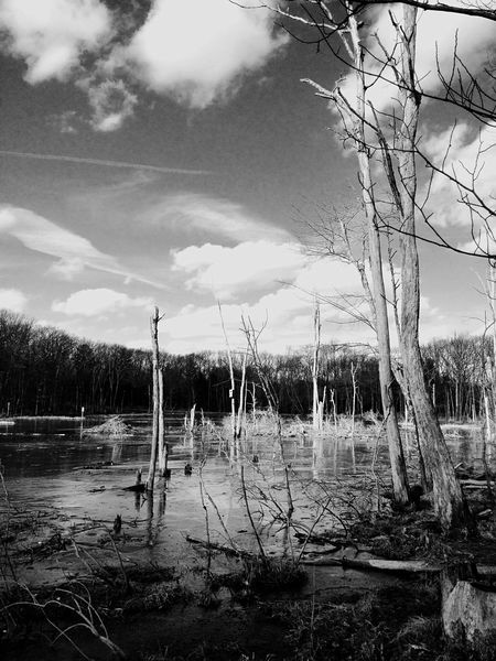 Beaver Pond during Wintertime Iphoneonly IPhone Photography IPhoneography Starmatic Family Clouds And Sky Black&white EyeEm Best Shots - Landscape Hueless