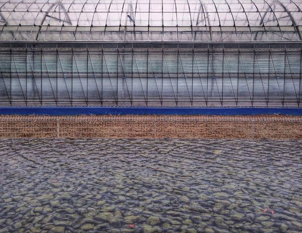 Greenhouse and Goldfish Agrarian Mie Prefecture Japan Iphonography