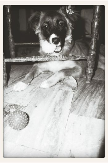 Dog, amo mt s2