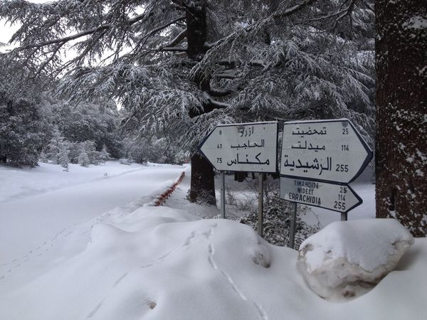 Azrou Meknès Sign Winter Arabic Cold Temperature Errachidia Field No People Outdoors Roadsign Snow Text Tree Winter