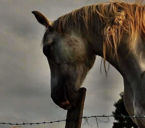 In the Autumn of his years. EyeEm Nature Lover Tadaa Community Horse Lover