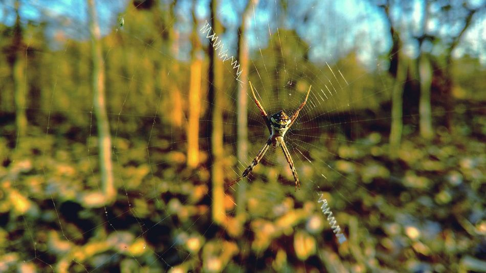 Spider Web Nature Spider Woods Insect Close-up Jungle Moto X Play Biology