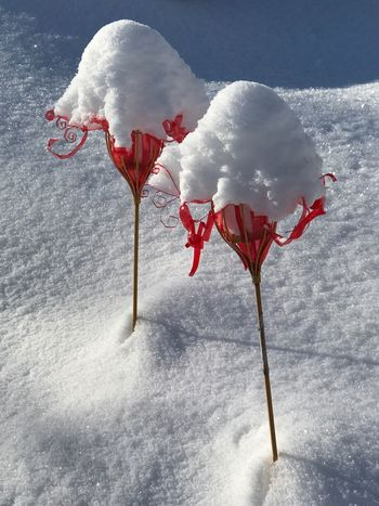 Cold Winter ❄⛄ Snow ❄ Red And White Colour
