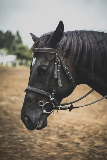 Horse power• Horse One Animal Domestic Animals Animal Animal Themes Mammal Animal Wildlife Day No People Outdoors Close-up Portrait Oil Pump EyeEmNewHere Fresh On Market 2017