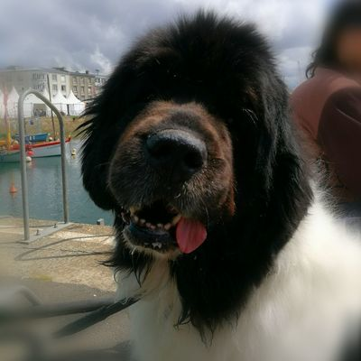 Water Pets Dog Protruding Portrait Close-up Sky Animal Body Part