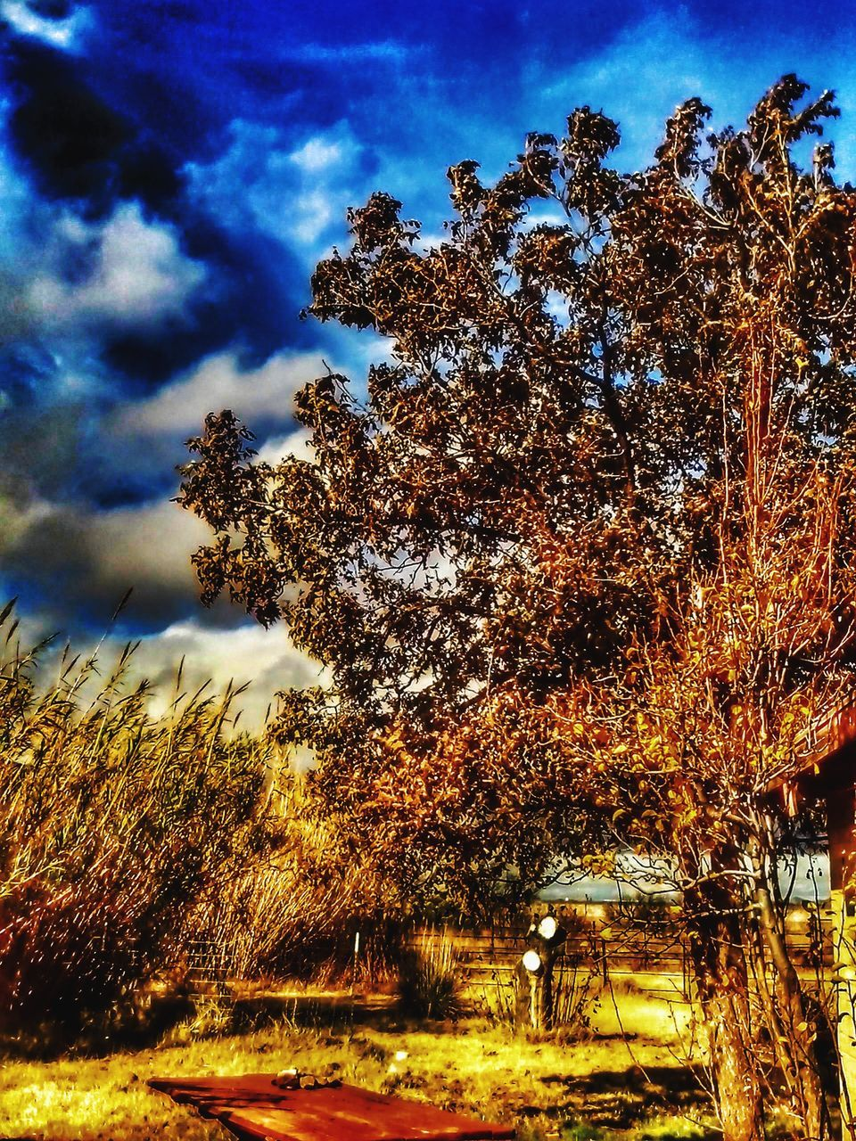 tree, sky, nature, low angle view, no people, day, outdoors, growth, cloud - sky, beauty in nature, tranquility, scenics