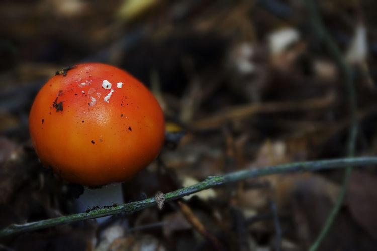 Mushroom and