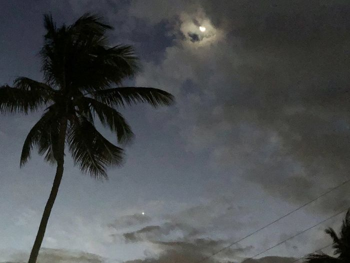 Low angle view of silhouette palm trees against sky at dusk