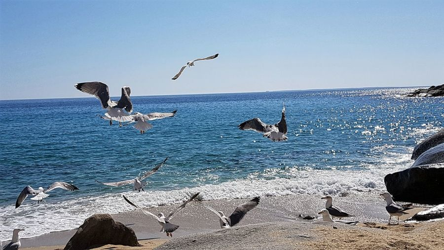 Seagulls In Flight Seascape Beauty In Nature Movement Beach Photography Tirrenic Sea Italy Wings Seagulls And Sea Bird Flying Sea Water Spread Wings Whale Blue Flock Of Birds Sky Sea Bird Black-headed Gull Water Bird Sea Life Seagull