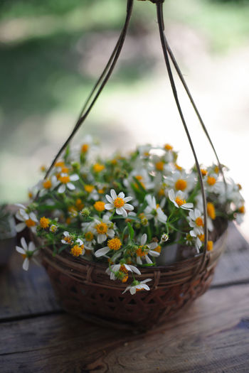 Close-up of flowers in basket on table