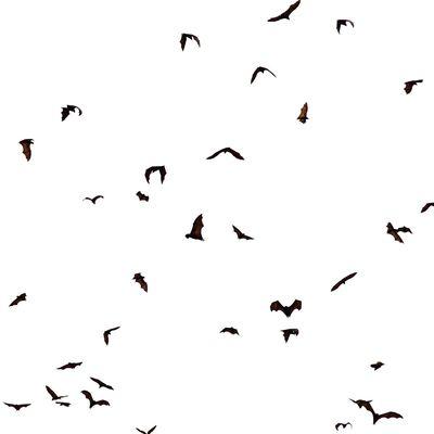 Bat Bats Nature Nature_collection Nature Photography Naturelovers Natural Beauty Naturephotography Wildlife Wildlife & Nature Wildlife Photography Wilderness Forest Forest Photography EyeEm Nature Lover EyeEm Best Shots EyeEm Best Shots - Nature