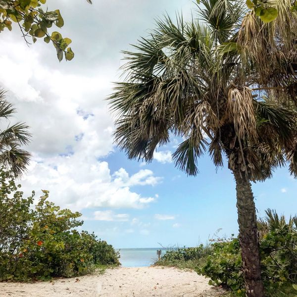 Tree Sky Plant Cloud - Sky Water Tranquility Beauty In Nature Nature Beach Sea No People Day Tropical Climate Palm Tree Sunlight