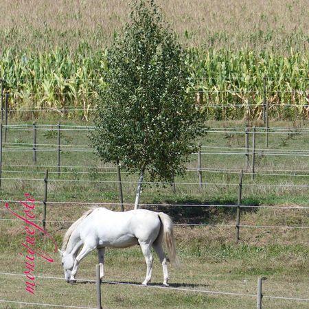 Vorbei an der Pferdekoppel. 💕💗 Monique52 Pferde Pferdebilder Spazieren Und Fotografieren Unterwegs Schwarzwald Hochrhein Black Forest
