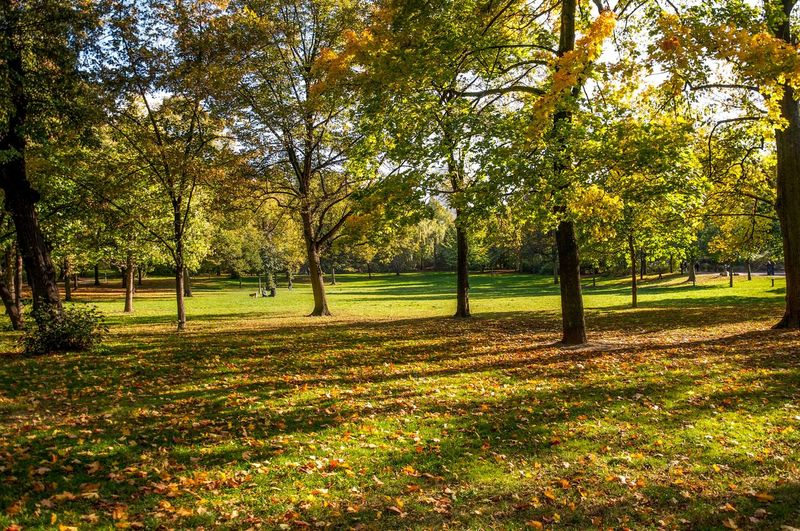 Trees on grassy field in park during autumn