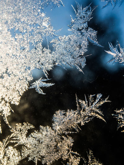 Beauty In Nature Branch Close-up Cold Temperature Day Nature No People Outdoors Sky Snowflake Tree Winter