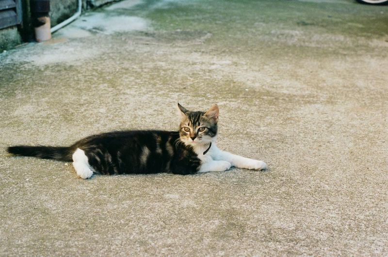 Cat Day Domestic Domestic Animals Domestic Cat Feline Full Length High Angle View Lying Down Mammal No People One Animal Pets Relaxation Resting Sitting Vertebrate Whisker