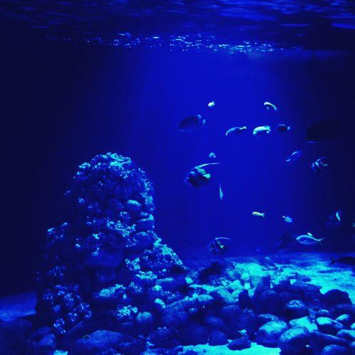 wycieczka w nieznane Fish beautiful