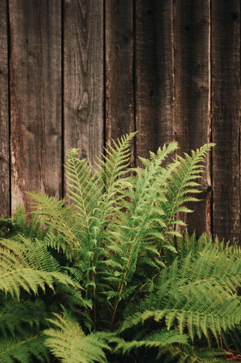 Tree Branch Forest Fern Leaf Spruce Tree Pinaceae Pine Tree Close-up Plant Evergreen Tree Plant Part Cactus Frond Us State Pine Woodland