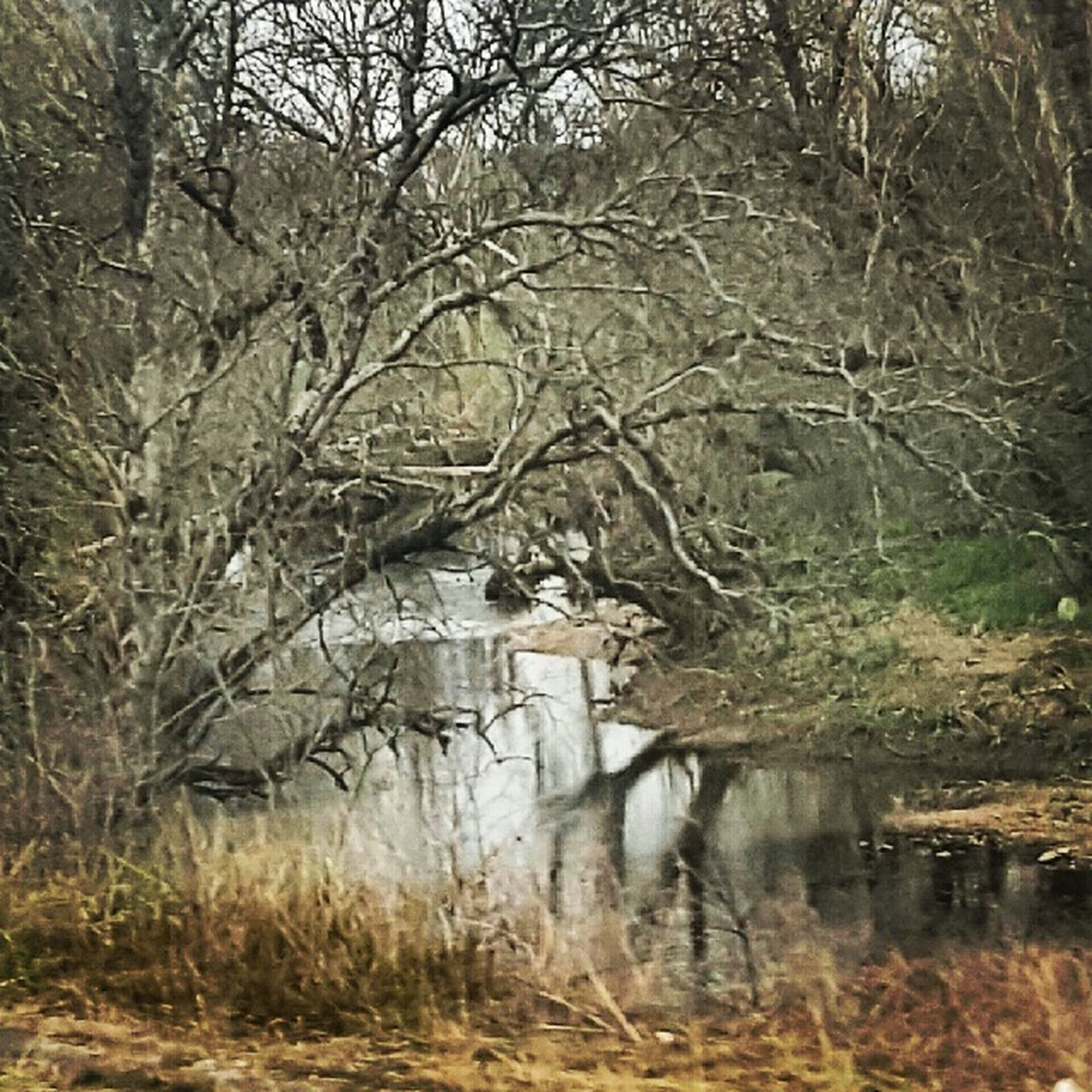 nature, water, no people, bare tree, cold temperature, day, tree, winter, outdoors, branch, architecture, grass, beauty in nature