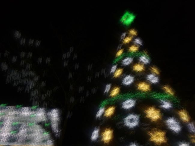 Night Illuminated Christmas Tree Christmas Celebration Building Exterior Architecture Outdoors Christmas Decoration No People Built Structure Tree Sky Christmas Lights Low Angle View