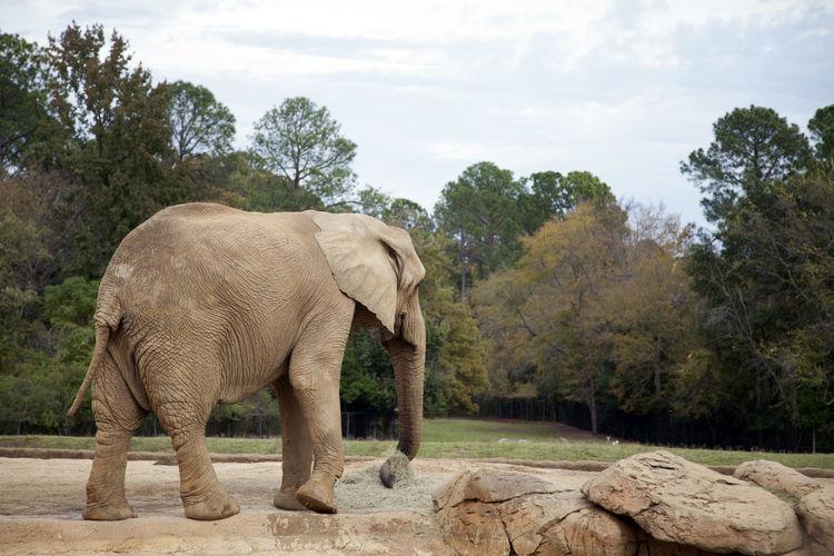Elephant standing in a farm