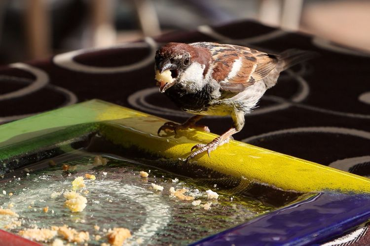 Close-up of bird eating food from plate