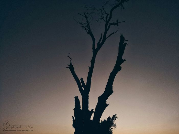Tree Silhouette Nature Tree Trunk Outdoors Sky Sunset