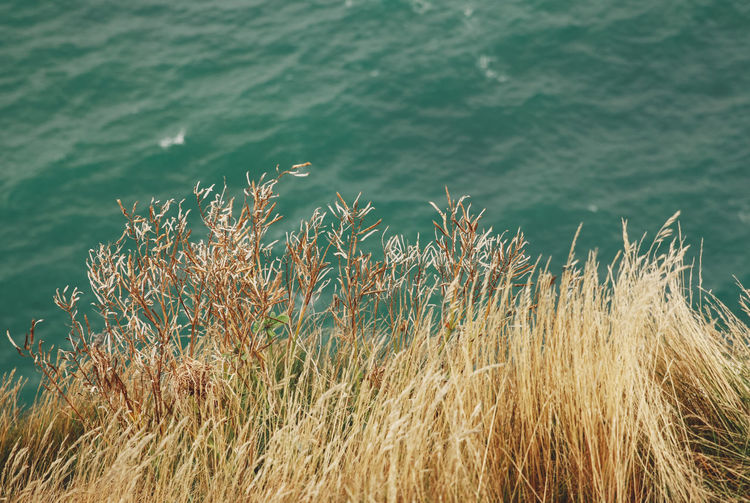 High Angle View Of Grass By Sea