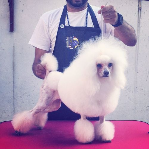 Domestic Animals Pets One Animal Dog Mammal Pet Owner Sitting Lifestyles Midsection Leisure Activity Grooming Groomer Groom mMenfFull LengthtTogethernessfFront ViewpPlayingpPersonhHoldingcCaninepPampered Pets