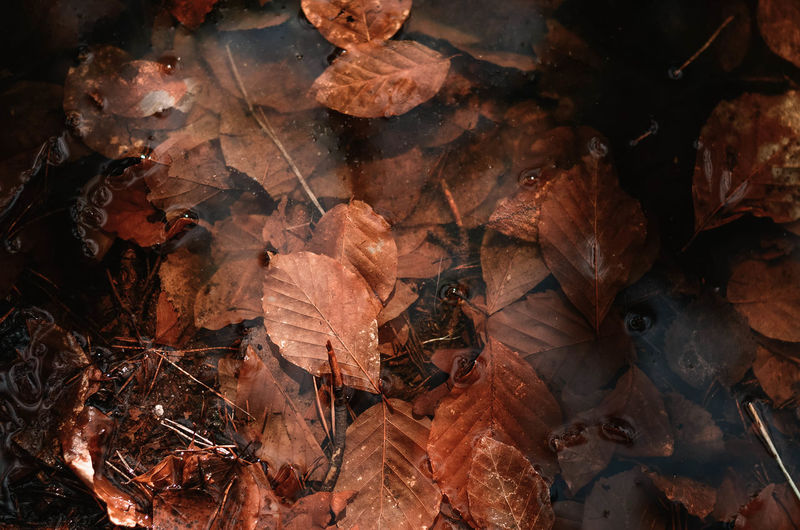 Leaf Plant Part Leaves Autumn Dry High Angle View Nature Change No People Day Vulnerability  Close-up Fragility Land Falling Full Frame Beauty In Nature Backgrounds Brown Outdoors Dried Fall Maple Leaf Poland Kaszuby