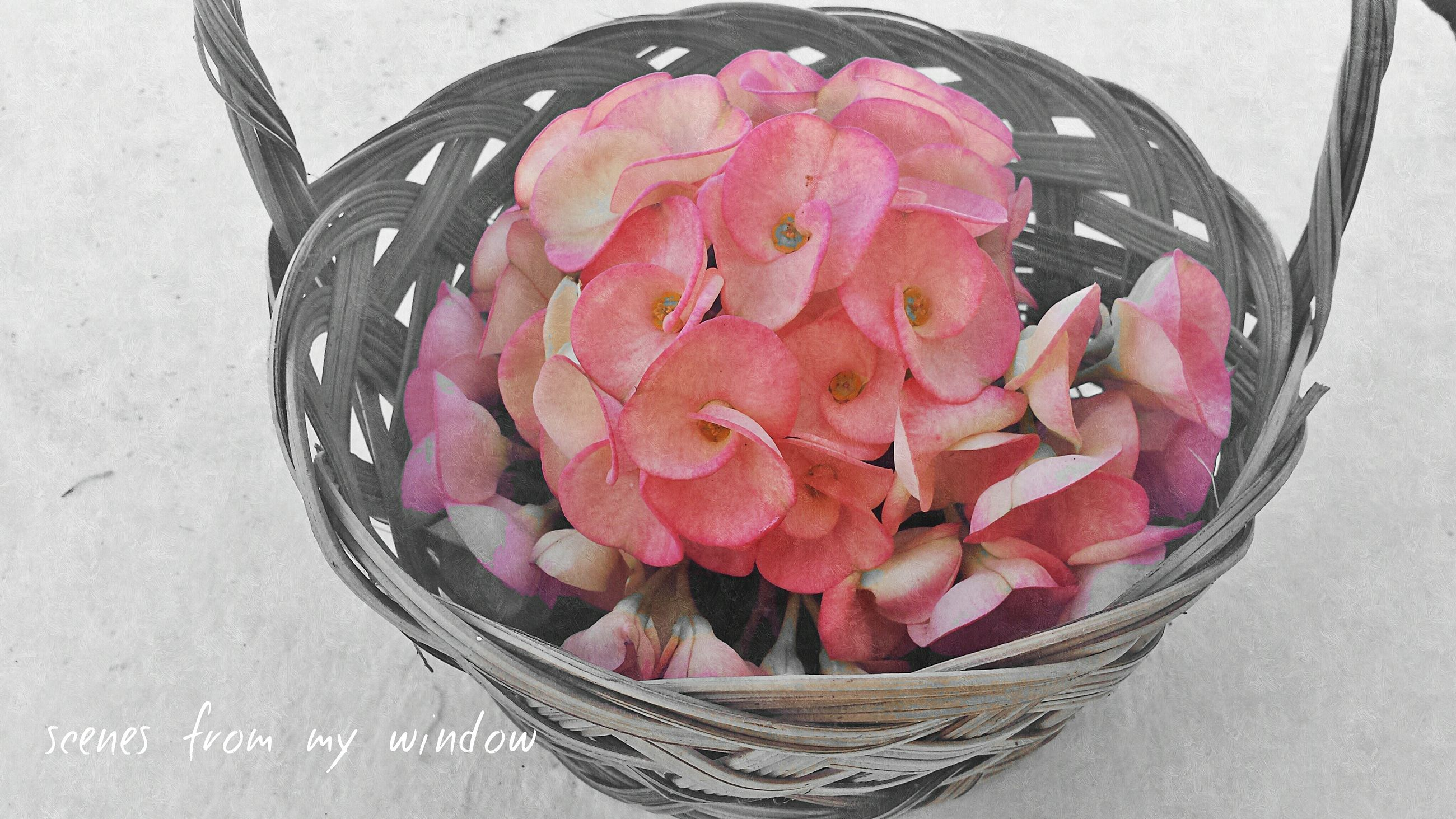 freshness, flower, indoors, rose - flower, high angle view, close-up, petal, food and drink, still life, table, pink color, food, fragility, red, sweet food, flower head, directly above, no people, rose, indulgence