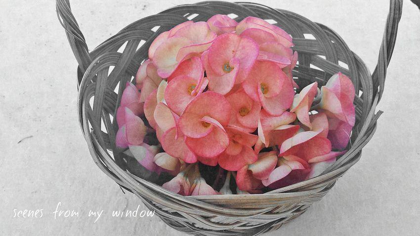 Flowerpower Basket Of Flowers 🌷 Taking Photo Hello World EyeEm Color Splash Respect For The Good Taste Flowerporn