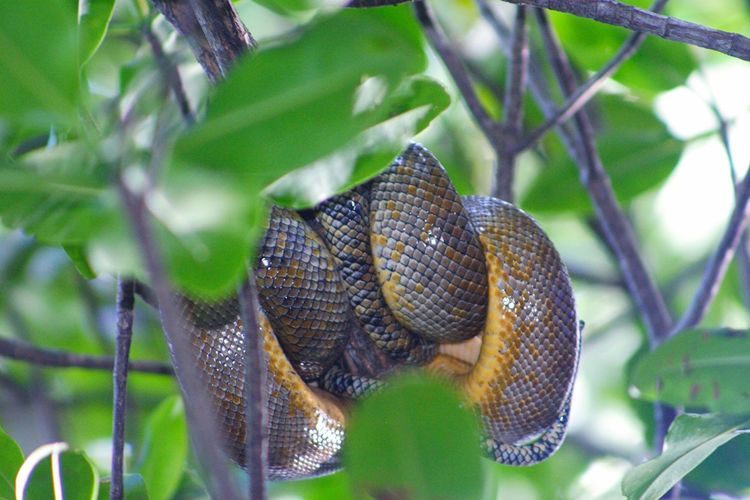 Low angle view of snake coiled on tree