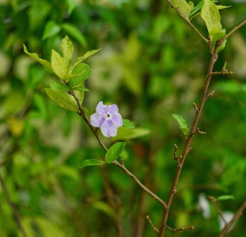 Growth Flower Nature Plant Fragility Beauty In Nature Leaf Blooming No People Green Color Outdoors Day Close-up Freshness Flower Head Periwinkle