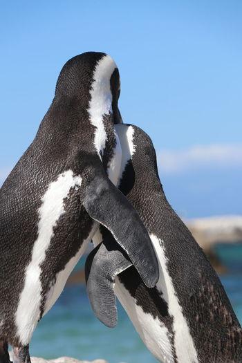 Close-up of a bird, penguin