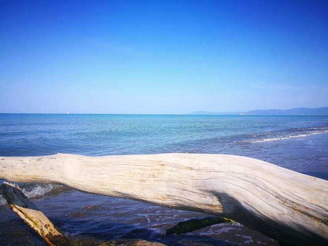 estate Trees And Nature Colorized Alone Tree Beautiful Colors Contemplazione Tranquility Spiaggia🐚 WoodLand Water Sea Beach Clear Sky Blue Sand Sunlight Summer Sky Horizon Over Water Coastline