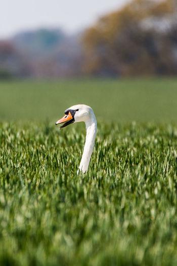 Close-up of a bird on field