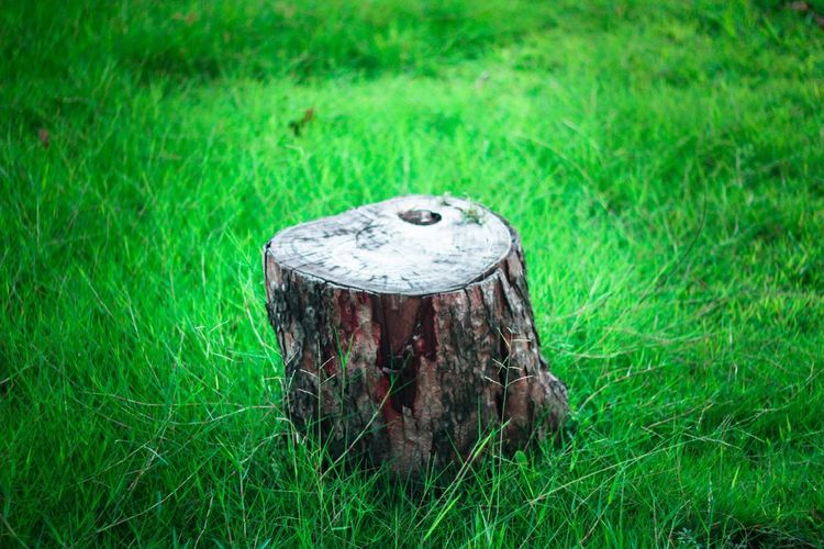 High angle view of tree stump on grassy land