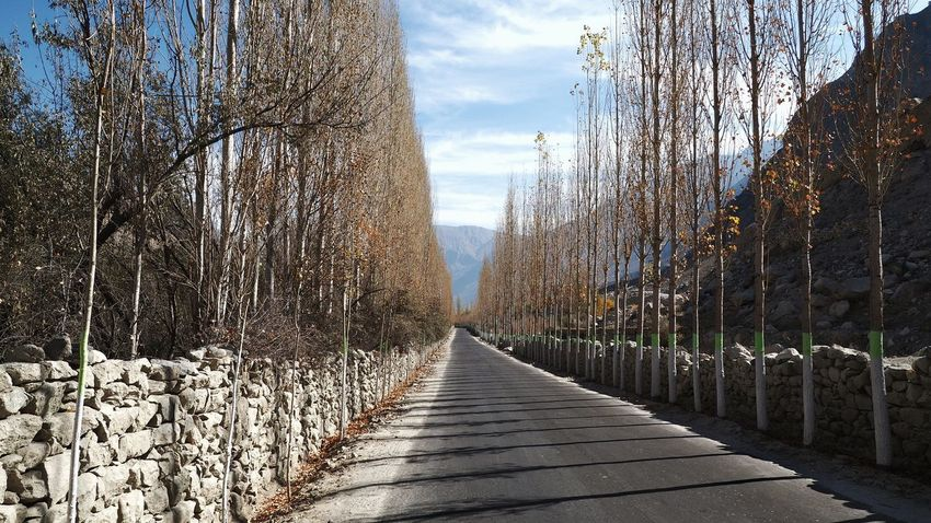 Road Way Trees Trees Wall Travel Destination Poplars With Road Shadow And Light Road With A View Road With Trees Rock Wall Road Rock Wall With Trees