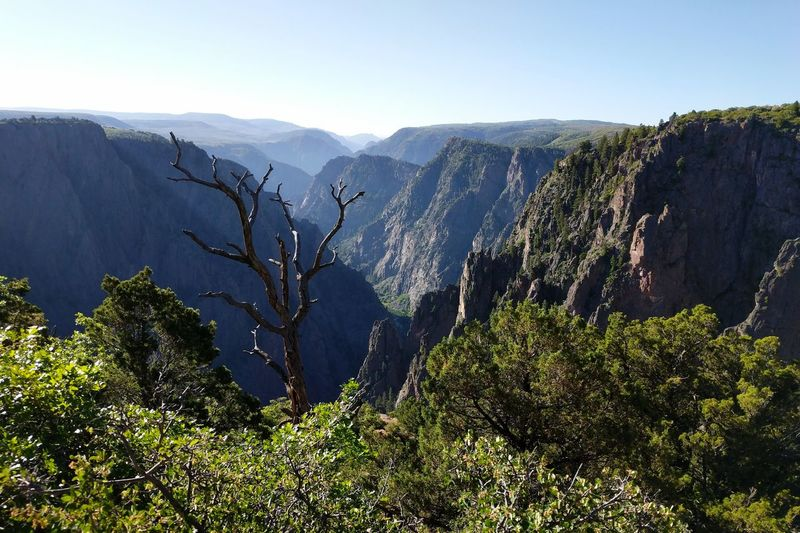 Vista Scenics Forces Of Nature Beauty In Nature Canyon Tree Pinaceae Pine Tree Sky Landscape Natural Landmark Physical Geography Geology Eroded
