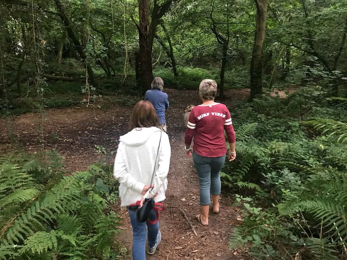 Friends walking Godolphin Woods, Cornwall Friends Walking In The Woods National Trust Rear View Real People Plant Men Tree Women Lifestyles Leisure Activity Togetherness Walking Nature Bonding Green Color