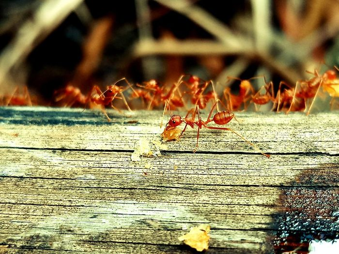 Animal Animal Themes Animal Wildlife Animals In The Wild Ant Close-up Day Focus On Foreground Group Of Animals Insect Invertebrate Nature No People Outdoors Selective Focus Sunlight Wood - Material