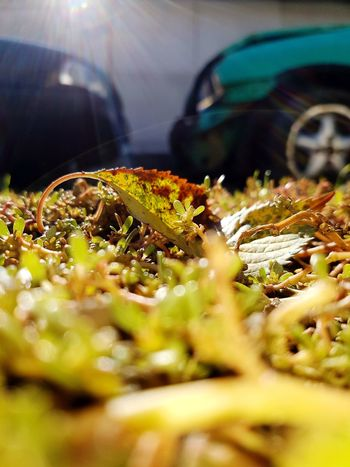 Nature and Cars Photography Photo MyPhotography EyeEm Selects EyeEm Best Shots Eye4photography  Enjoying Life EyeEm Nature Lover Audi80b4 Audi EyeEm EyeEmNewHere Samsungphotography Audi80 Opel Autumn Autumn Colors Leaf Focus On Foreground Focus Eyemphotography FourRings Cars Selective Focus Car No People Close-up Day Nature Outdoors EyeEm Ready