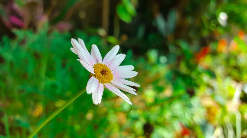 Beauty In Nature Flower Flower Head Flowering Plant Freshness Nature Petal Plant Pollen White Color