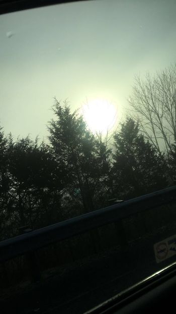 Fog Tree Window No People Transportation Car Sun Sky Nature Day Beauty In Nature